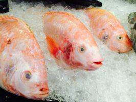Поради тим, хто купує заморожену рибу