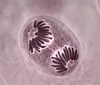 Клітинна регенерація