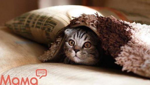 Фелинотерапия: лікування кішками